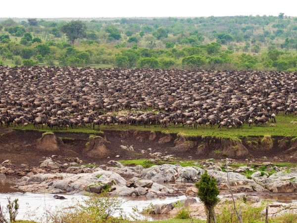 7 days/6 Nights Serengeti Migration Safari