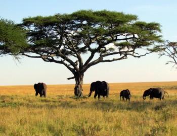 10Days Northern Tanzania Safari