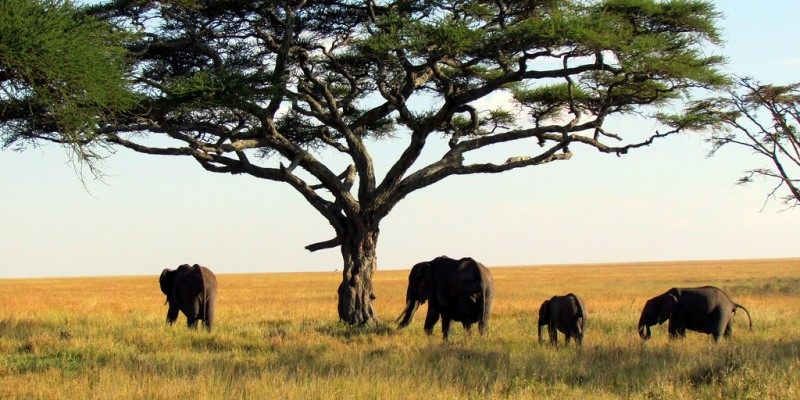 10Days Northern Tanzania Safari