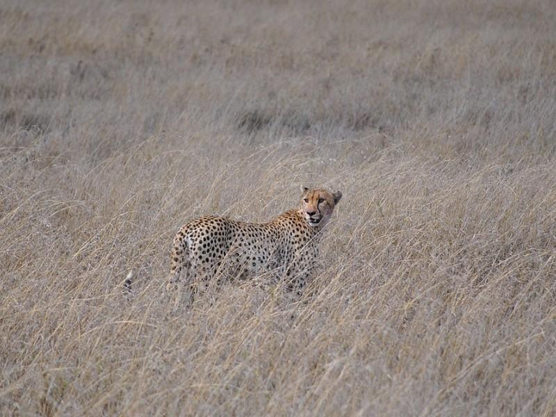 10 Days Northern Tanzania Safari