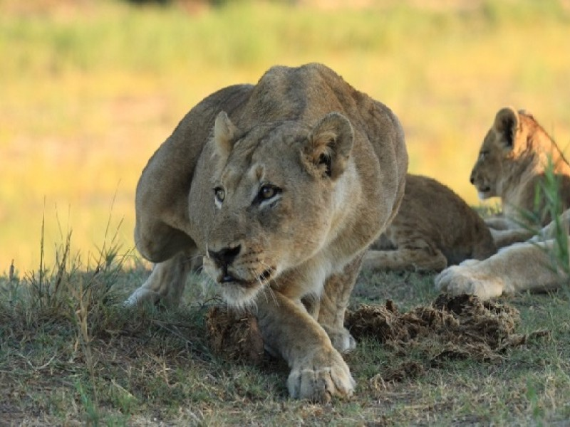8 Days Lake Turkana Camping Safari Tours