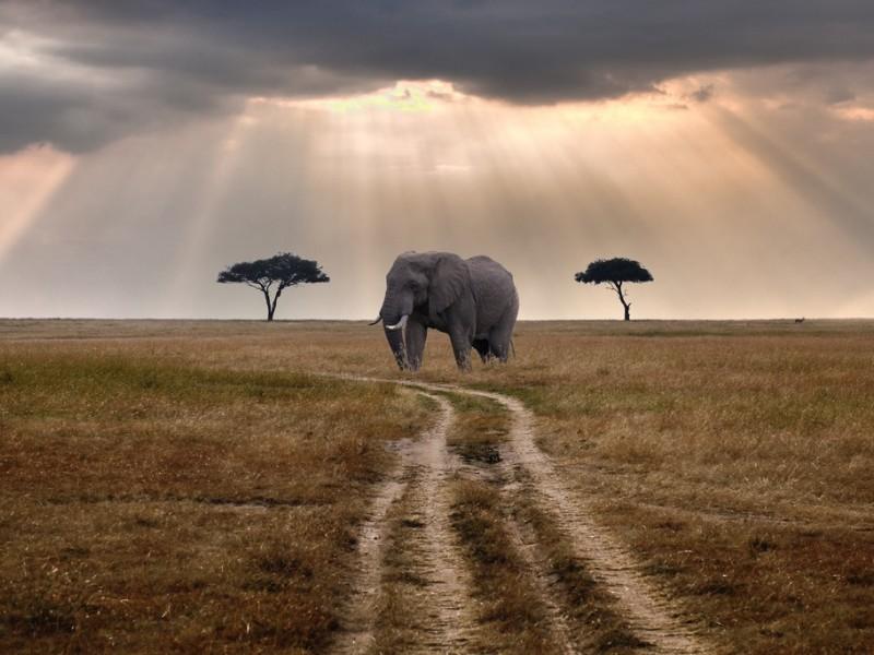 Tanzania Safari | 4Days Tanzania  Budget Safari Packages