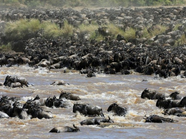 WILDERBEEST MIGRATION SAFARI ON PRIVATE BOOK WITH US