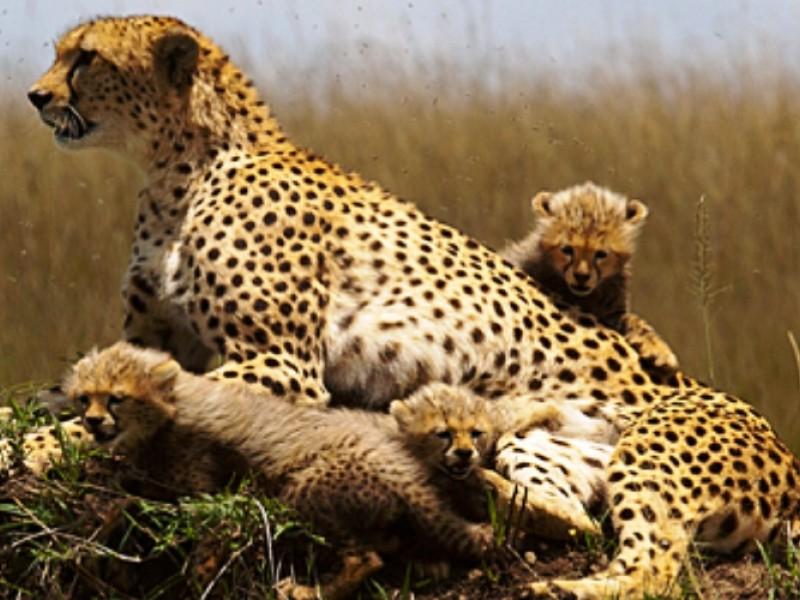 12 Days Africa Family Holidays Safari Vacation